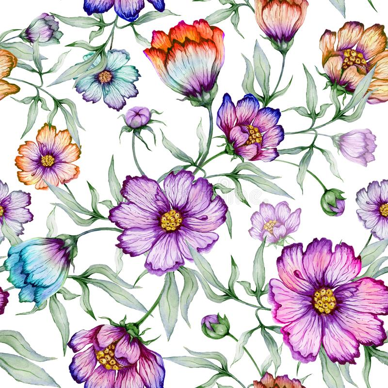 Beautiful colorful cosmos flowers with leaves on white background. Seamless floral pattern. Watercolor painting. Hand painted botanical illustration. Wallpaper stock illustration