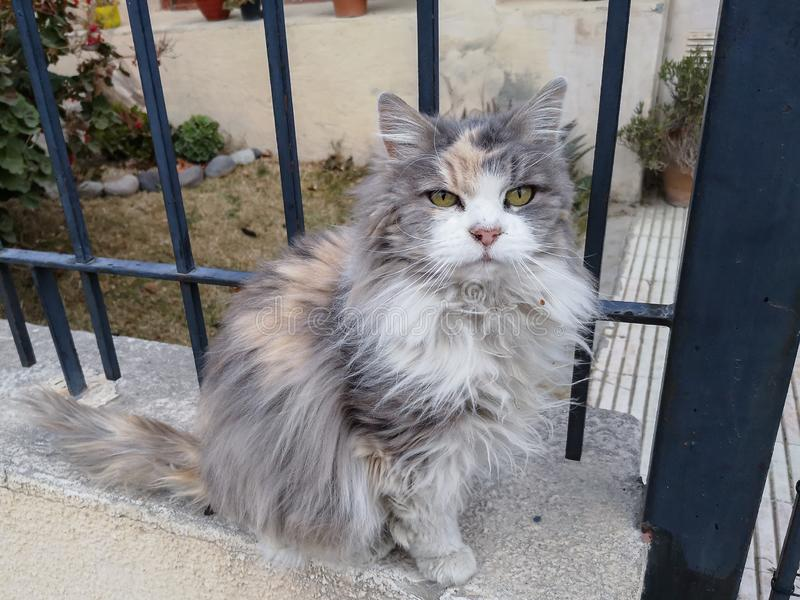 A beautiful colorful and disheveled cat. Sitting on the sidewalk stock photos