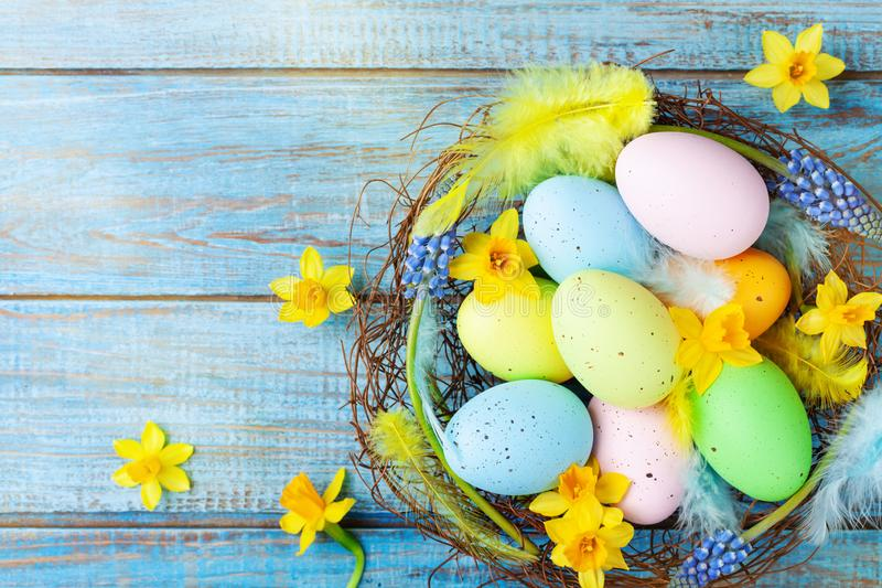 Beautiful colorful Easter eggs in nest, feather and spring flowers on rustic table top view. Holiday card or banner royalty free stock photography