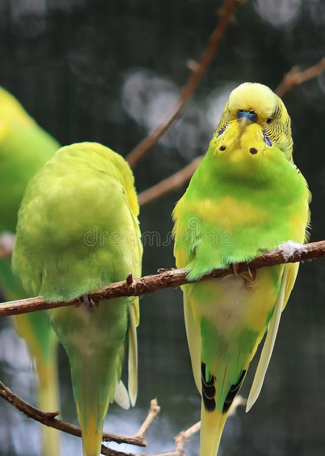 Beautiful and colorful exotic birds in a close up portrait. View stock photography