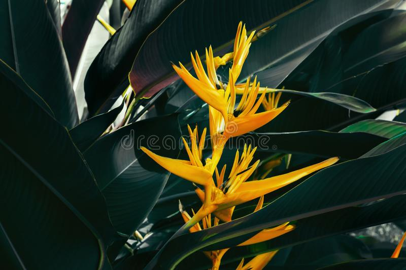 beautiful colorful exotic flower on dark leaf background royalty free stock photography
