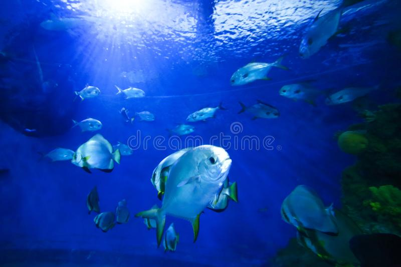 beautiful colorful fish in an aquarium royalty free stock photography