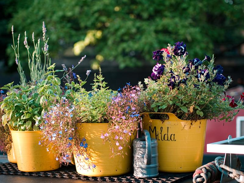 Mediterranean colorful flower pots and a watering can royalty free stock photos
