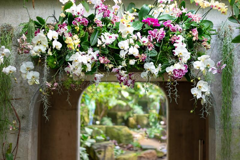 Beautiful colorful flower top of archway arangement made of orchid flowers royalty free stock photos