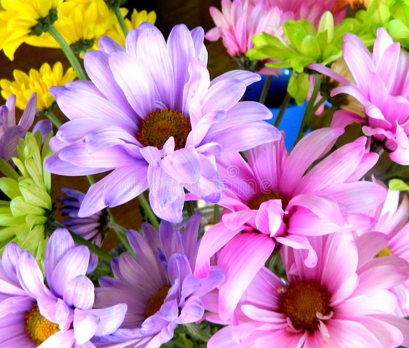 Colorful Flowers royalty free stock photos