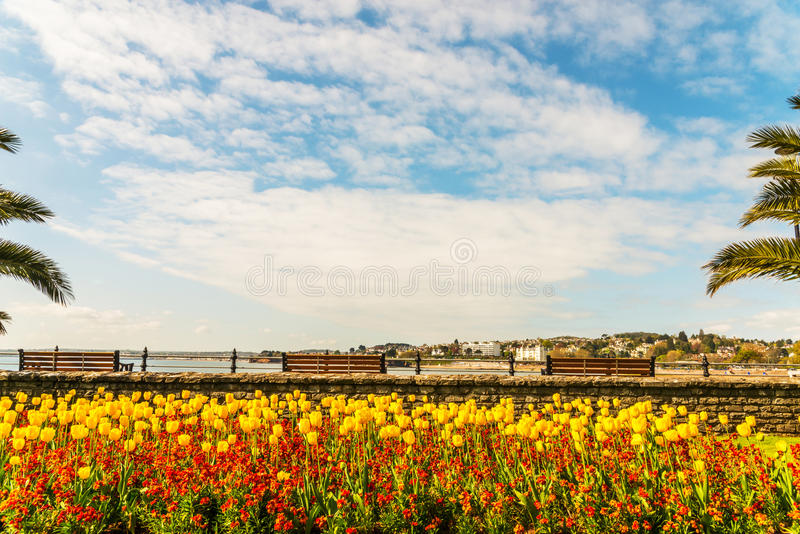 Beautiful colorful flowers and empty benches over the ocean bay, view of the seaside town, red cliffs and the beach royalty free stock image