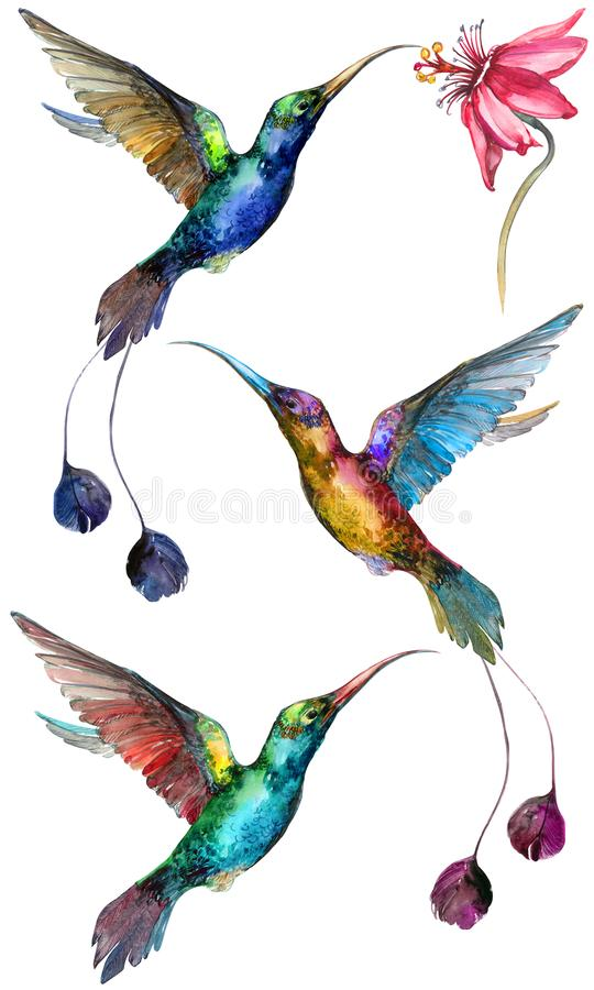 Beautiful colorful flying hummingbirds isolated on white background. Collection of exotic tropical birds with vivid feathering and long beaks and tails royalty free illustration