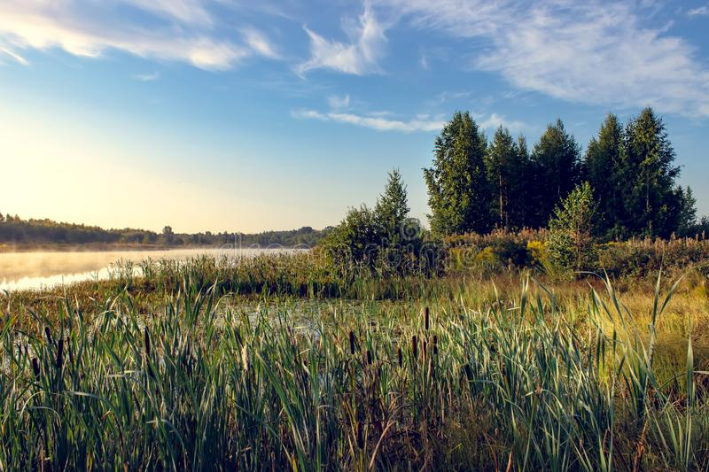 A beautiful, colorful landscape of a misty swamp during the sunrise. Atmospheric, tranquil wetland scenery with sun in Russia stock photo