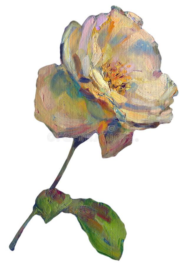 Beautiful colorful light yellow orange Rose Flower on white background. oil painting illustration stock illustration