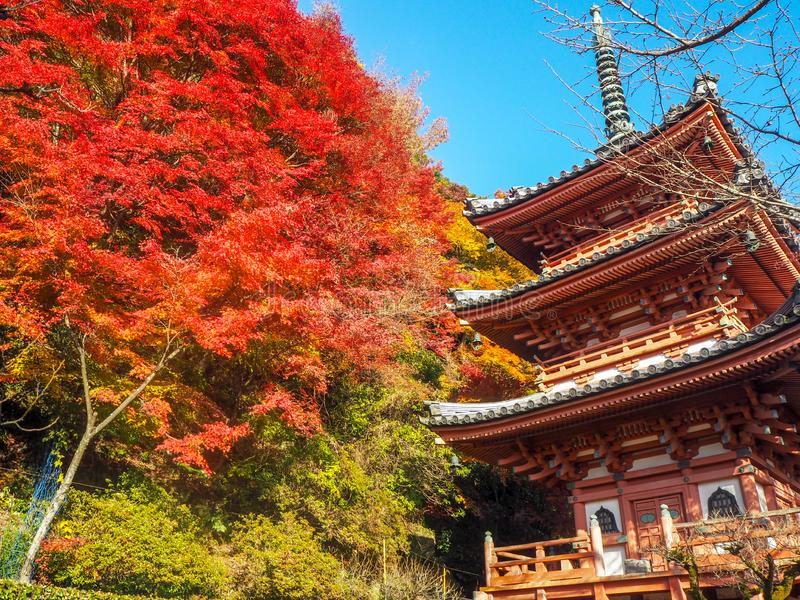Beautiful colorful maple tree with pagoda in japanese temple for background royalty free stock photos