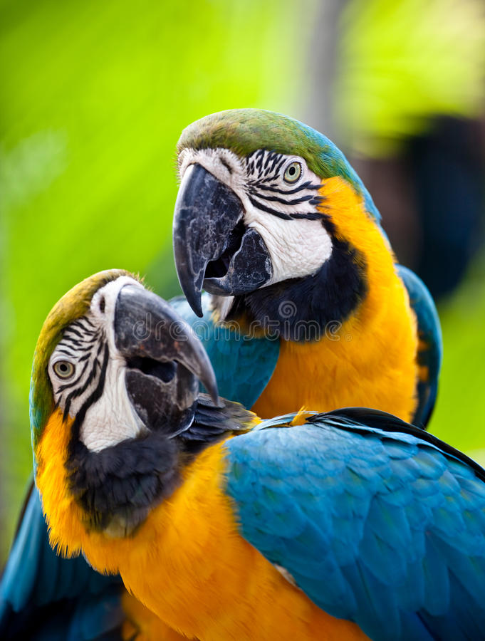 Free Beautiful Colorful Parrot Stock Images - 12707114