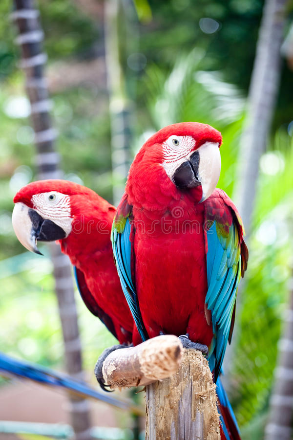Free Beautiful Colorful Parrot Stock Images - 12707704