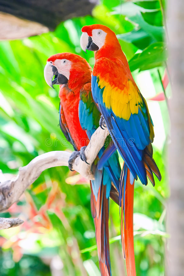 Free Beautiful Colorful Parrot Royalty Free Stock Photo - 18133525