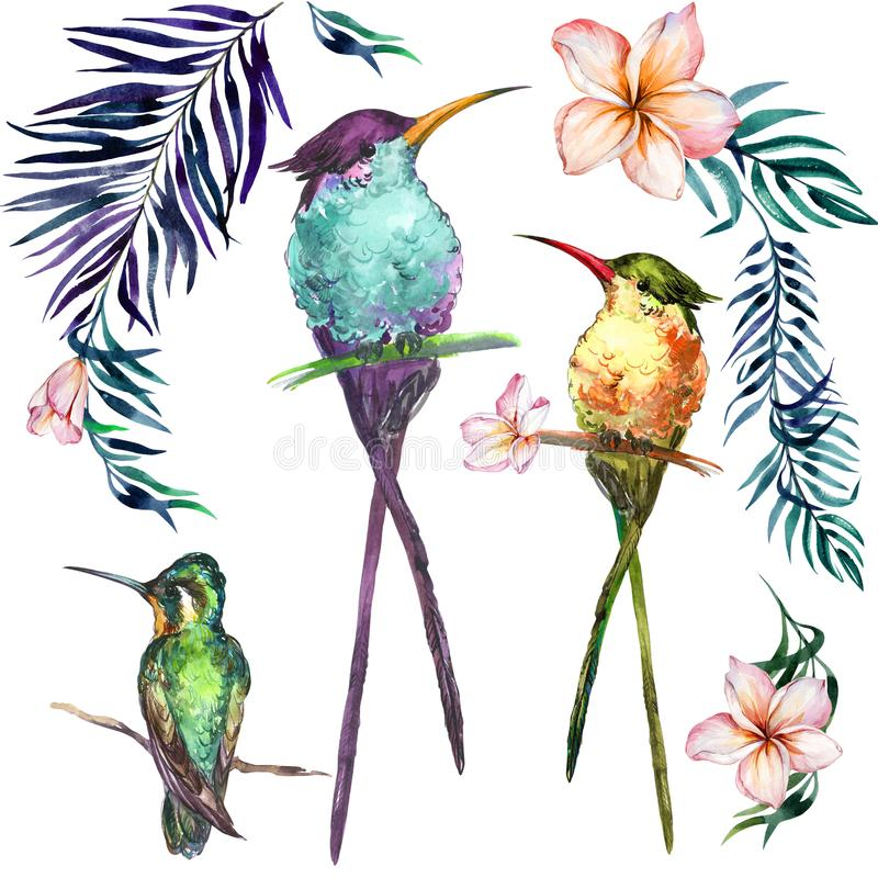 Beautiful colorful tropical birds sitting on branches isolated o stock illustration