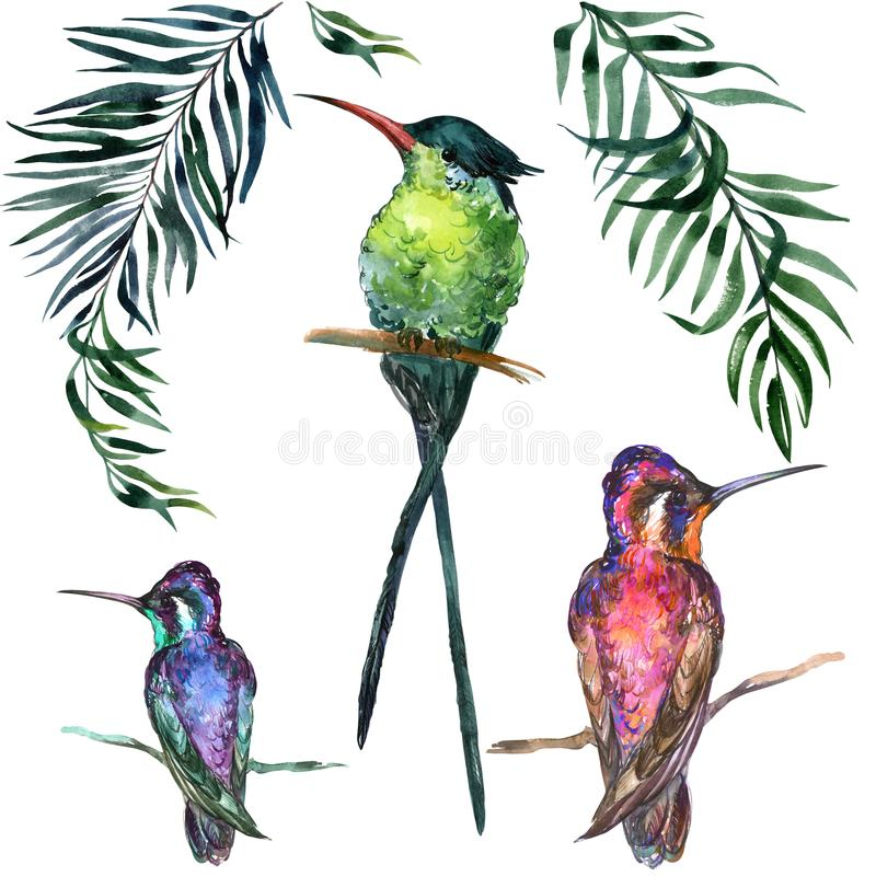 Beautiful colorful tropical birds sitting on branches isolated on white background. royalty free illustration