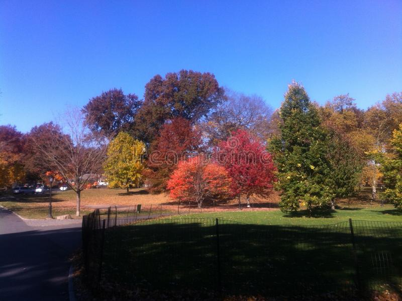 Beautiful colors of trees in upstate New York. During fall stock photo