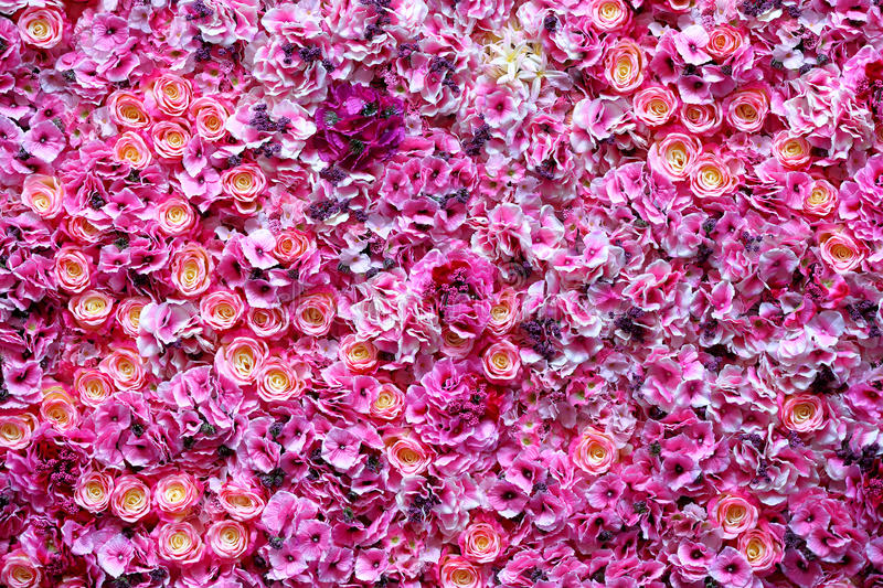 Beautiful colour flowers wall background.  royalty free stock image