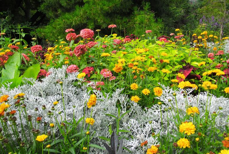 Beautiful Colourful ixed Flower Bed In Vancouver Stanley Park Perennial Garden In August 2019. Beautiful Colourful mixed Flower Bed In Vancouver Stanley Park stock image
