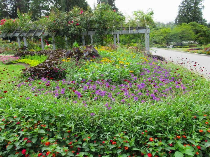 Beautiful Colourful ixed Flower Bed In Vancouver Stanley Park Perennial Garden In August 2019. Beautiful Colourful mixed Flower Bed In Vancouver Stanley Park stock images