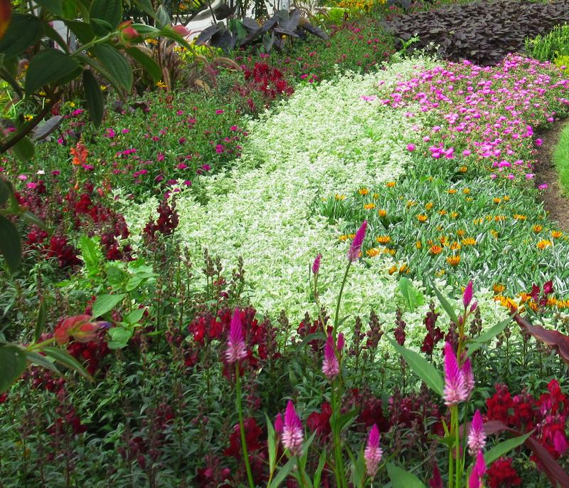 Beautiful Colourful ixed Flower Bed In Vancouver Stanley Park Perennial Garden In August 2019. Beautiful Colourful mixed Flower Bed In Vancouver Stanley Park royalty free stock photo