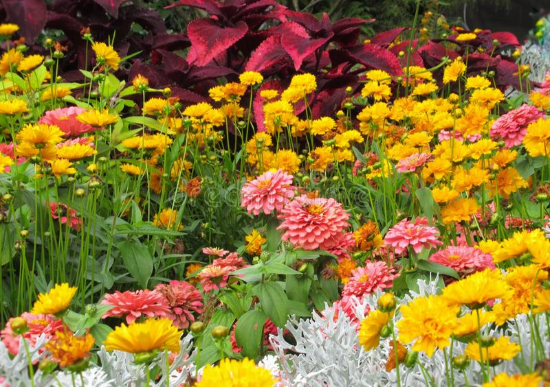Beautiful Colourful ixed Flower Bed In Vancouver Stanley Park Perennial Garden In August 2019. Beautiful Colourful mixed Flower Bed In Vancouver Stanley Park royalty free stock images