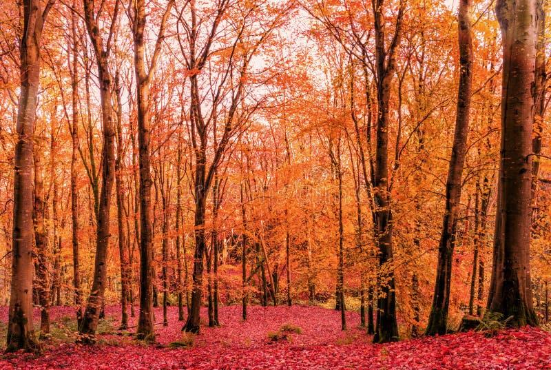 The Beautiful Colours Of Autumn stock photo