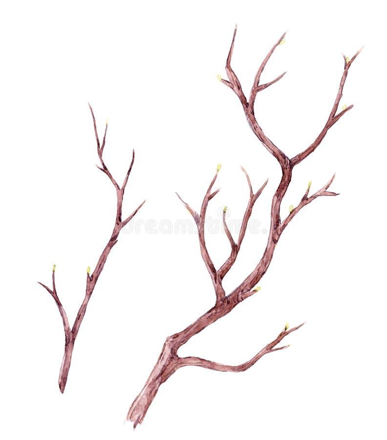Watercolor tree branch composition vector illustration