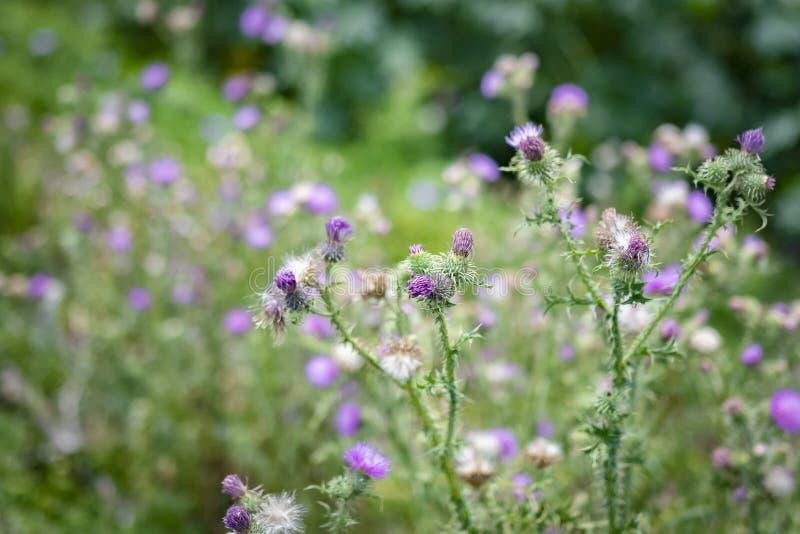 Purple flowers. A beautiful composition of purple flowers stock image