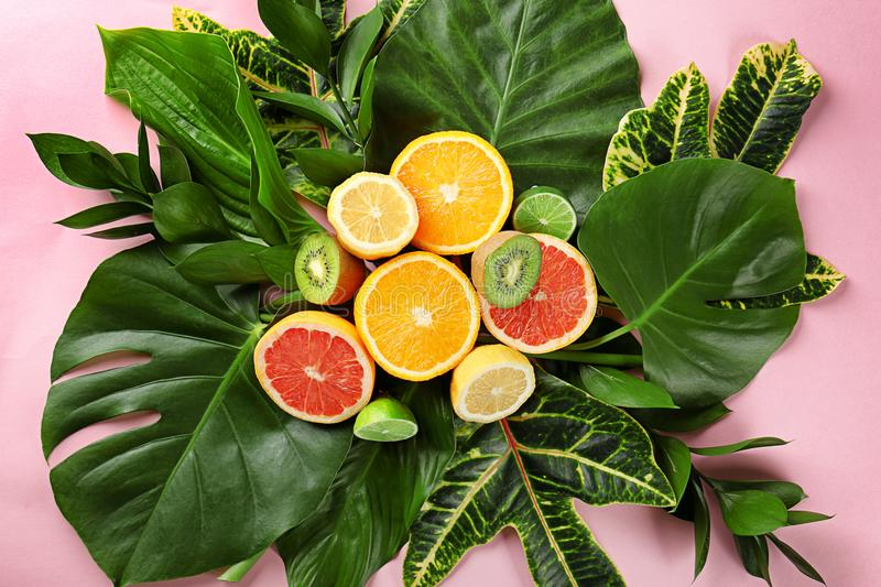 Beautiful composition with variety of exotic fresh plants and fruits royalty free stock image
