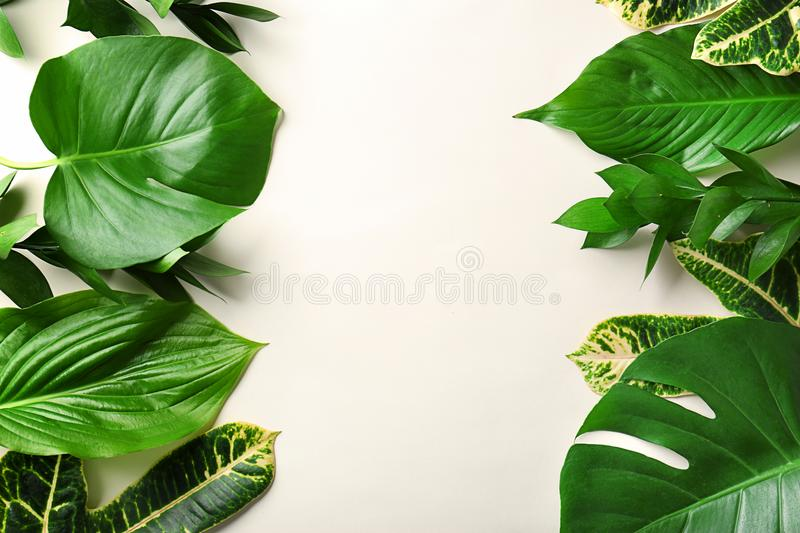 Beautiful composition with variety of fresh exotic plants stock photo