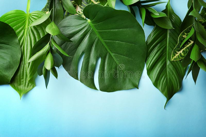 Beautiful composition with variety of fresh exotic plants on blue background royalty free stock photography