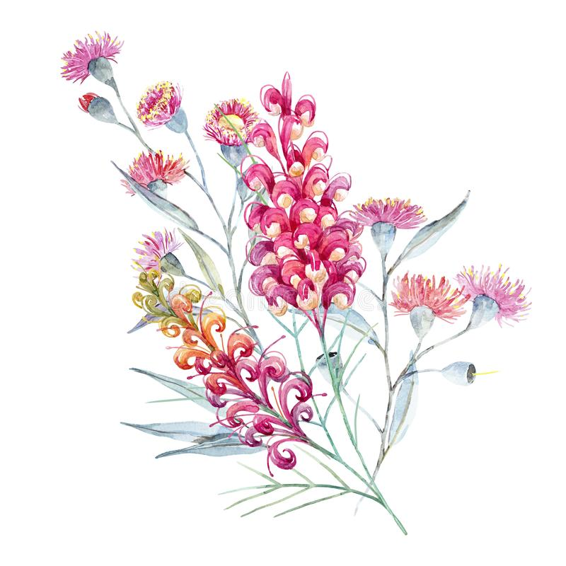 Watercolor australian grevillea composition vector illustration