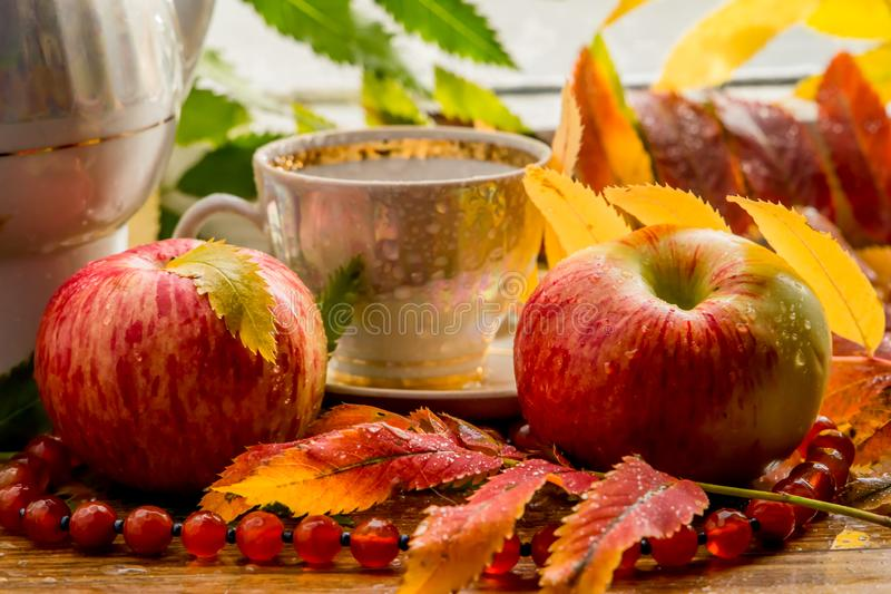 Beautiful composition of wet leaves of Rowan and fresh apples stock image