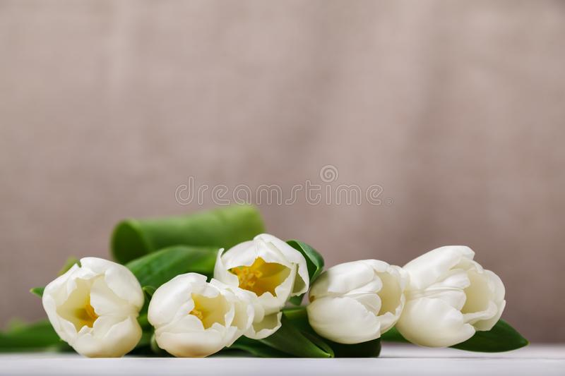 Beautiful composition with white tulips close-up on a beige background. Spring still life, soft focus, place for text stock photo