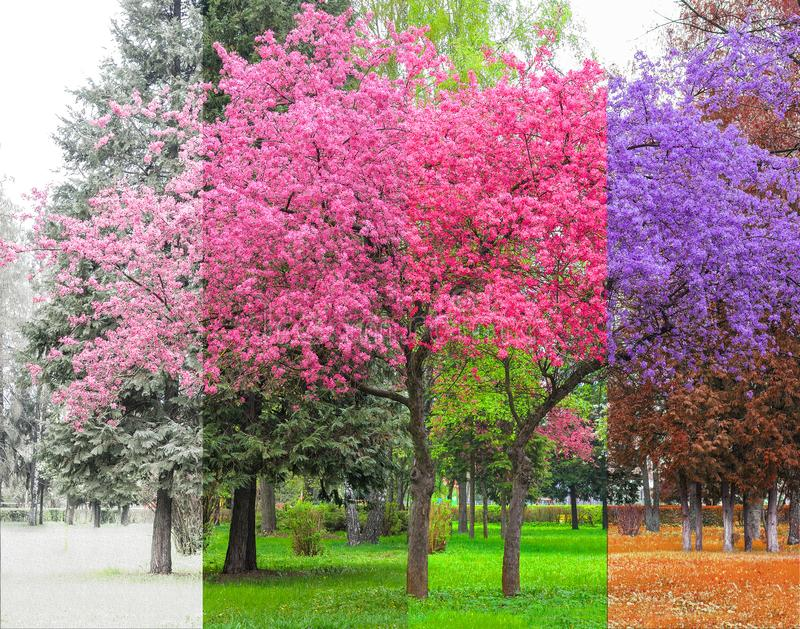 Beautiful concept of four seasons tree. Beautiful background with a concept of four seasons tree colored for each season, spring, summer, autumn and winter stock photos