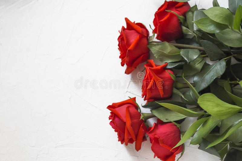 Beautiful concept with fresh red roses on white concrete background with copy space.  stock photo