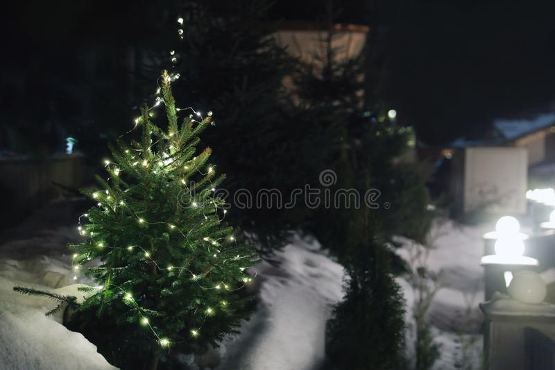 Beautiful conifer tree with Christmas lights in snow drift on street, space for text. Winter. Holiday stock photo