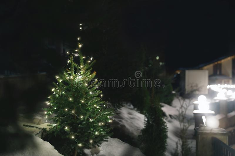 Beautiful conifer tree with Christmas lights in snow drift. On street, space for text. Winter holiday royalty free stock photo