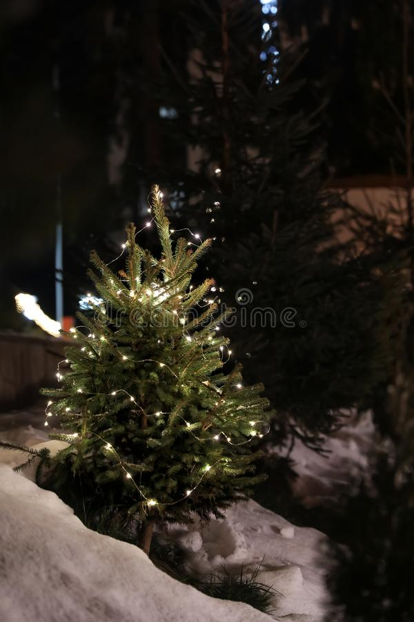 Beautiful conifer tree with glowing Christmas lights in snow drift on street. Winter holiday royalty free stock photo