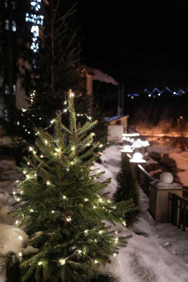 Beautiful conifer tree with glowing Christmas lights in snow drift on street. Winter holiday royalty free stock image