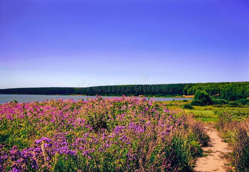 Beautiful contryside landscape background with flower field, clear blue sky, sand road, forest and lake stock image
