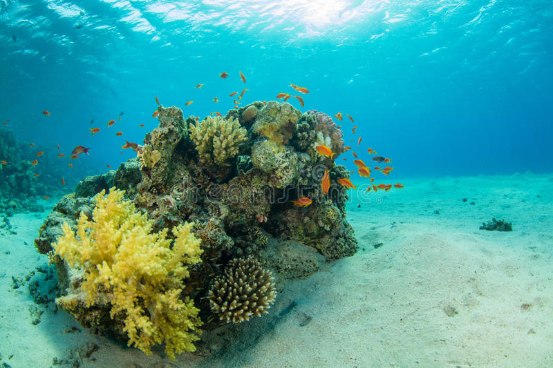 Beautiful coral reef with sealife royalty free stock photography