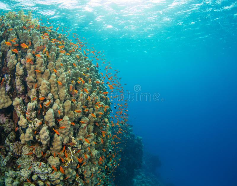 Beautiful coral reef with sealife stock image