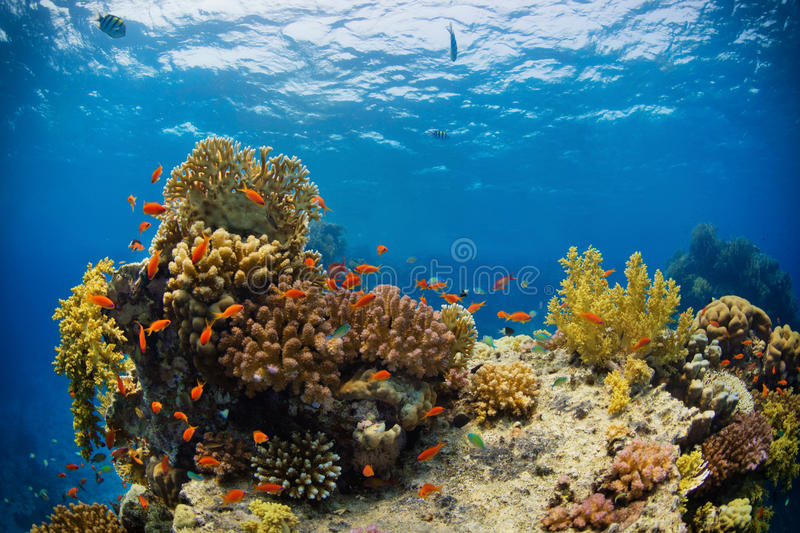 Beautiful coral reef with sealife stock images
