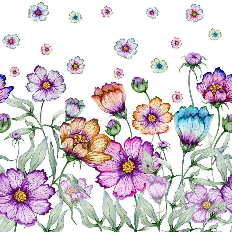 Beautiful cosmos flowers with green leaves on white background. Seamless floral pattern. Watercolor painting. Hand drawn and painted illustration. Fabric royalty free illustration