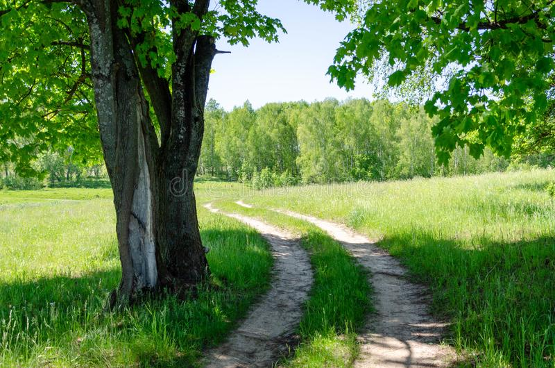 Beautiful Country road in forest royalty free stock image