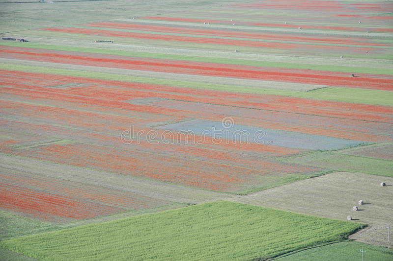 Beautiful countryside scene, abstract bloom. Umbria, central Italy stock photos