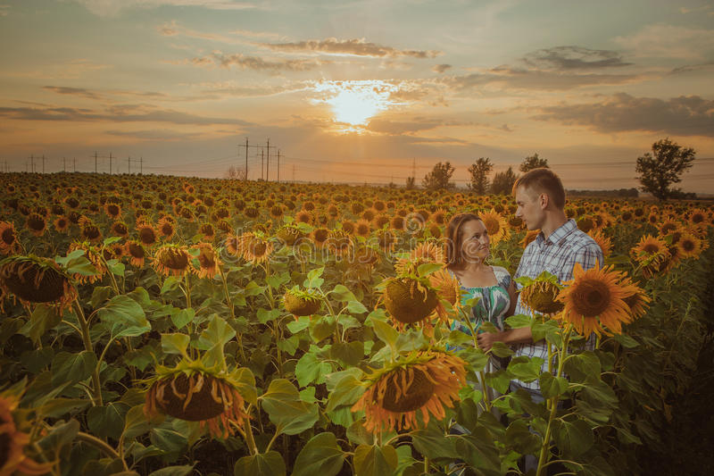 Beautiful couple having fun in sunflowers fields stock photos