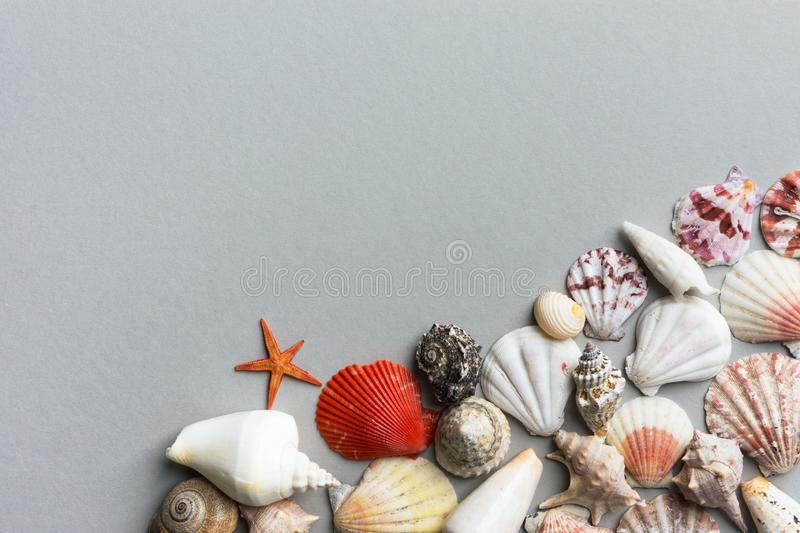 Beautiful creative nautical summer background. Sea shells of different shapes and colors on gray stone royalty free stock photography