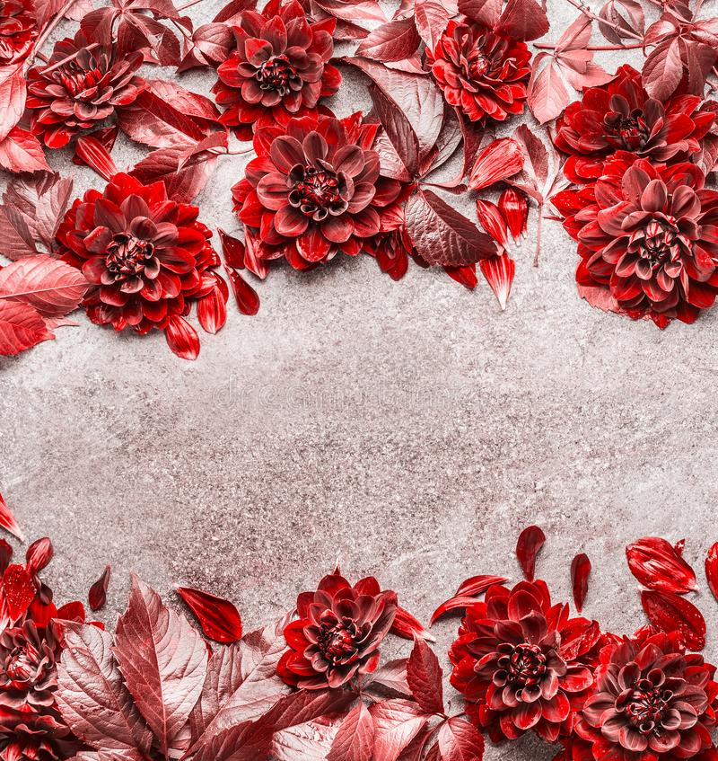 Beautiful creative red autumn flowers and leaves frame composing on gray stone background. Floral fall pattern , flat lay. Top view royalty free stock photo